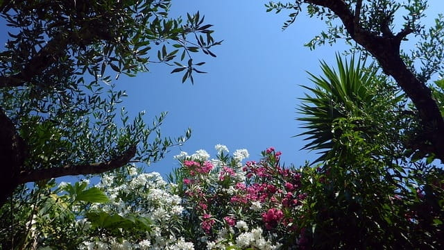 Prendre soin de son jardin en été sans gaspiller d'eau.