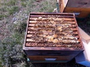 Des rayons de miel.