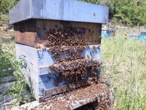 Ruche et ses abeilles.